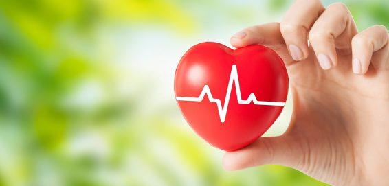 Období srdce a tenkého střeva od 15.5. – 14.7.